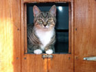 Image of Lily looking through the catflap